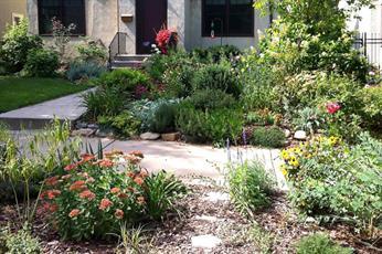 Raingardens reduce runoff pollution in storm water.