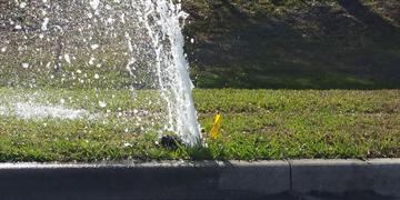 Broken Sprinkler Wasting Water
