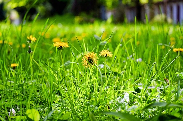 Reasons to keep your grass longer