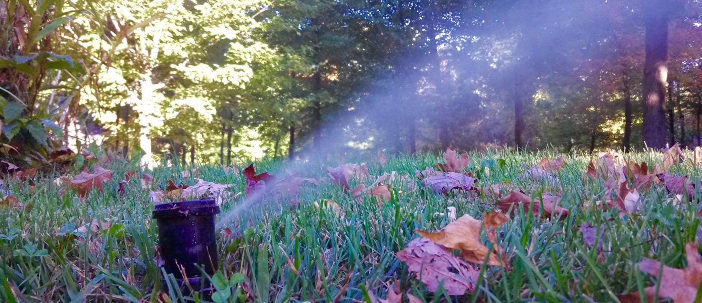 sprinkler watering backyard grass
