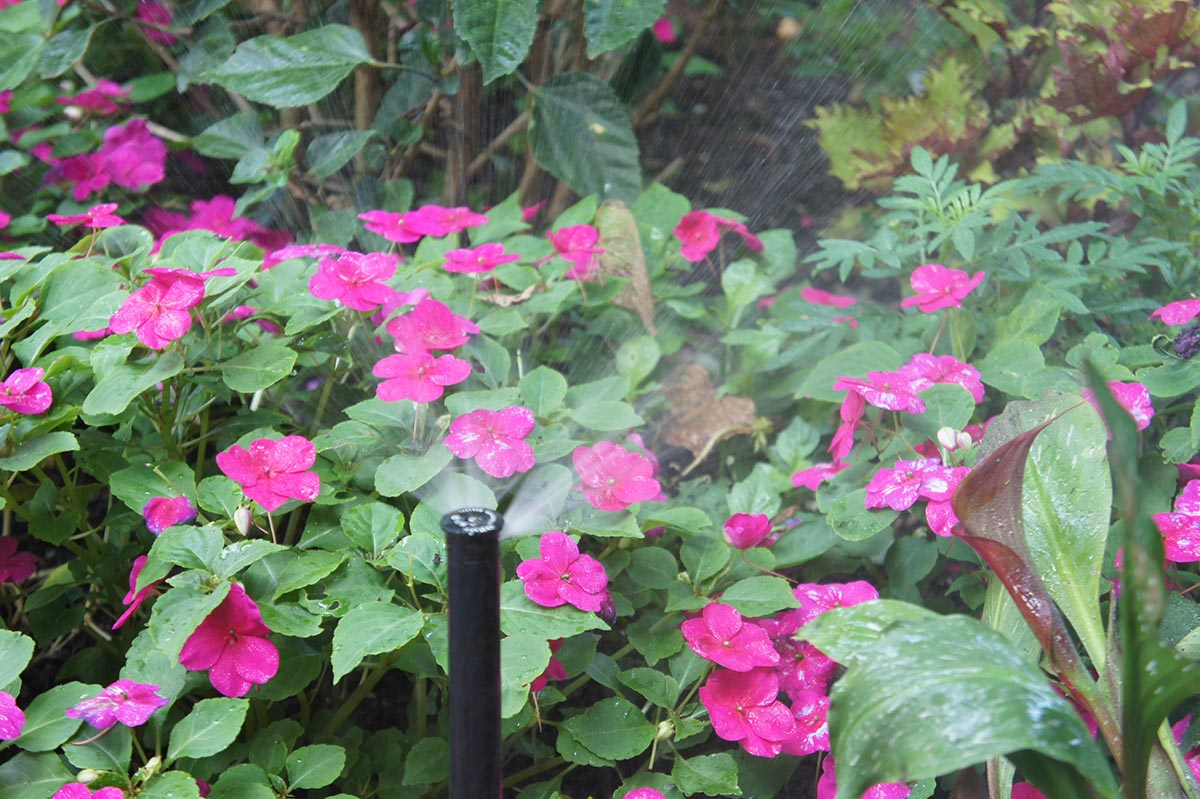 plants and pink flowers