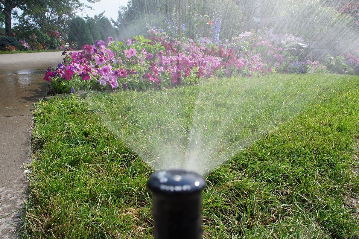 sprinkler head watering pink flowers and grass