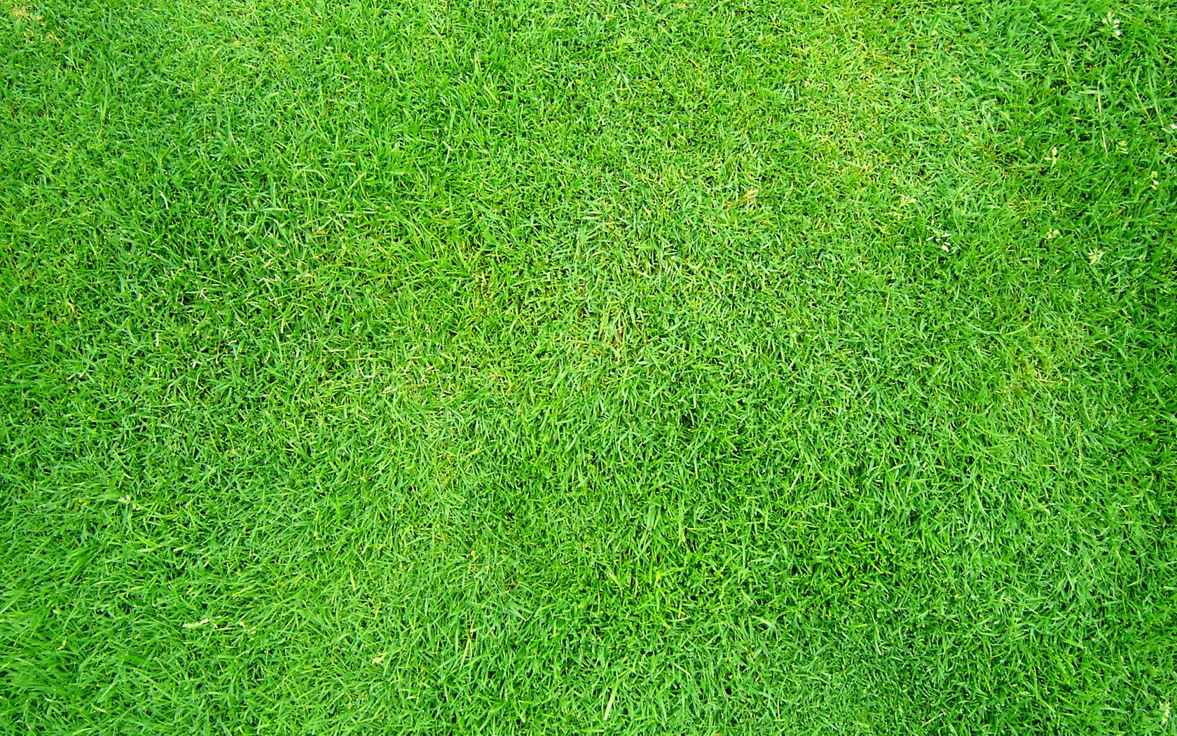 Textured grass photo